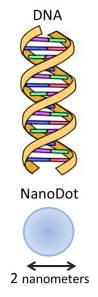 The diameter of a nanodot used in this charging device is the same as the diameter of DNA!