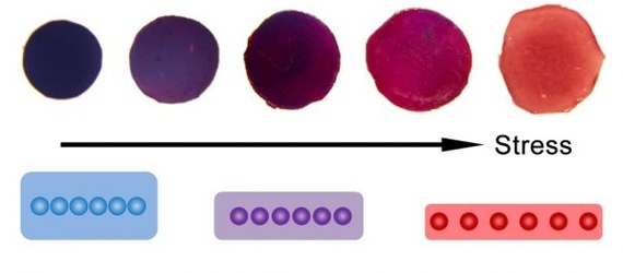 Colour spectrum of gold film based on pressure.  Blue is the film in its original form where the nanoparticles are joined together, red is when the pressure applied has been great enough to separate the gold nanoparticles