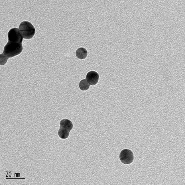 TEM image of gold nanoparticles used in my current research.